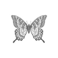Swallowtail Clear Stamp Set